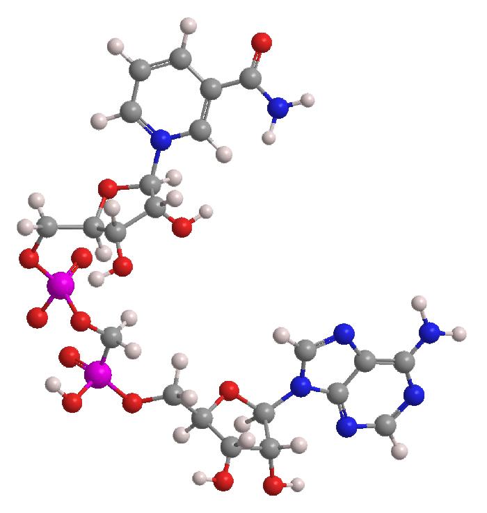 Clenbutrol Ingredient Nicotinamide