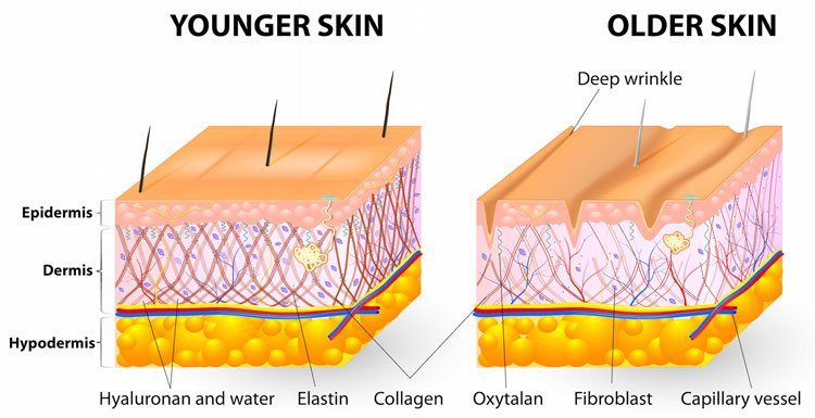 Effects Of Aging On Collagen