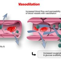 Vasodilation: Definition, Side Effects, Uses, Drugs, Foods, And Supplements