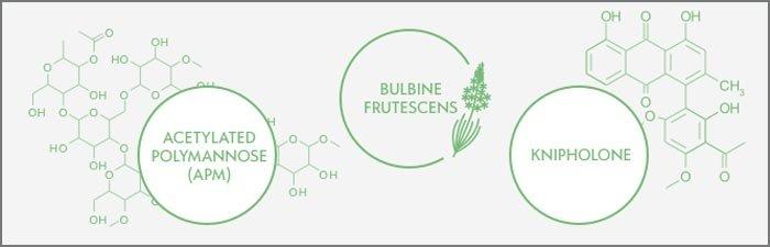 XYZ Smart Collagen Ingredients
