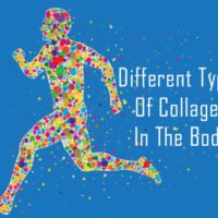 The Different Types Of Collagen In The Body