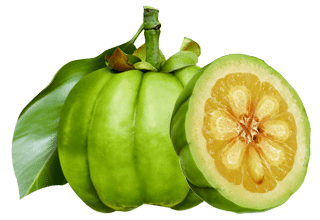 clenbutrol ingredient garcinia cambogia