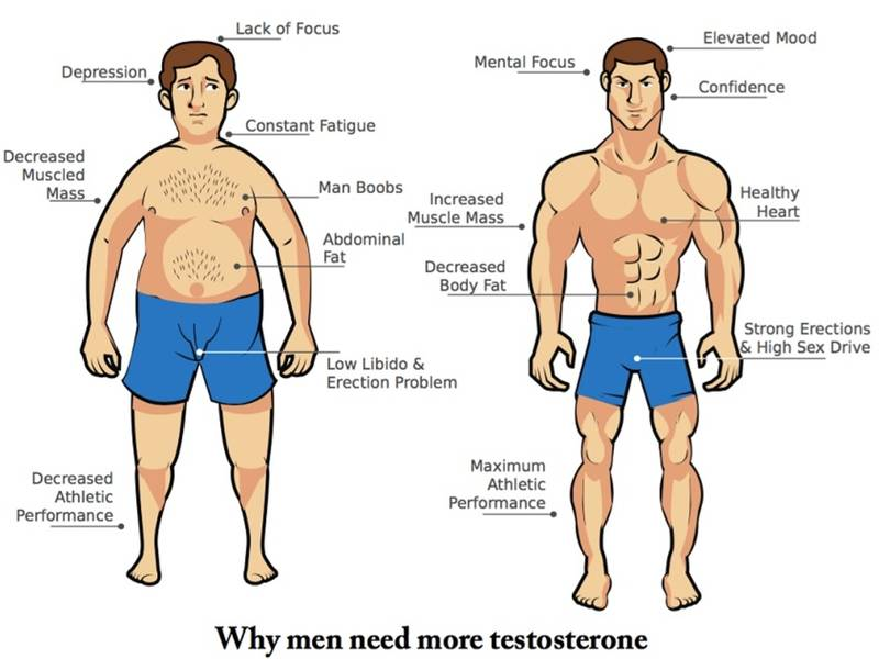 Why men Need More Testosterone